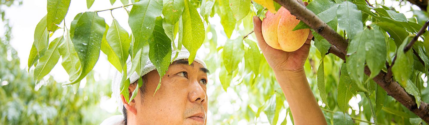 写真:末房さんが桃を眺めている様子3