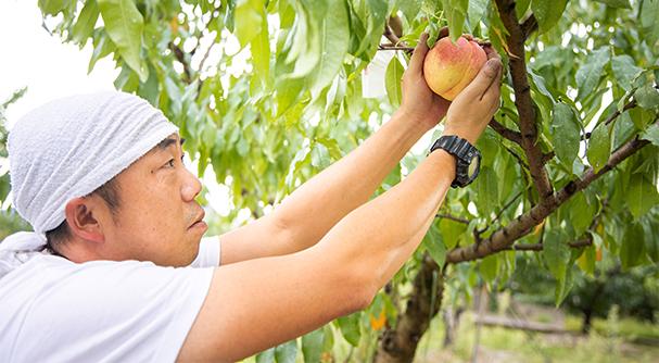 写真:末房さんが桃を眺めている様子2