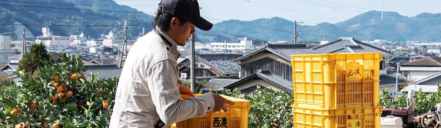 写真:藪内さんがみかんの箱を運んでいる様子