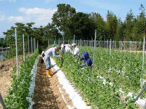 写真:農業体験風景