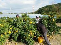 写真:果樹の就農研修風景