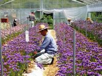 写真:花きの就農研修風景